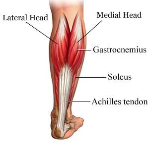 Physio Brisbane CBD sports injuries Achilles tendon exercises.png